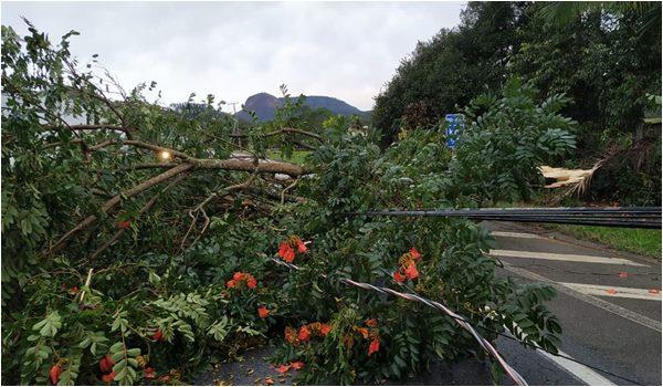 Ciclone em Piuna Santa Catarina - Estrada Interditada - Foto Defesa Civil SC