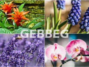 Gebbeg Floricultura : Flores da Primavera